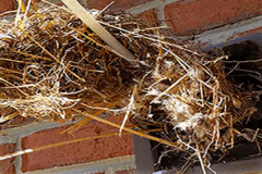 birds nest removal services